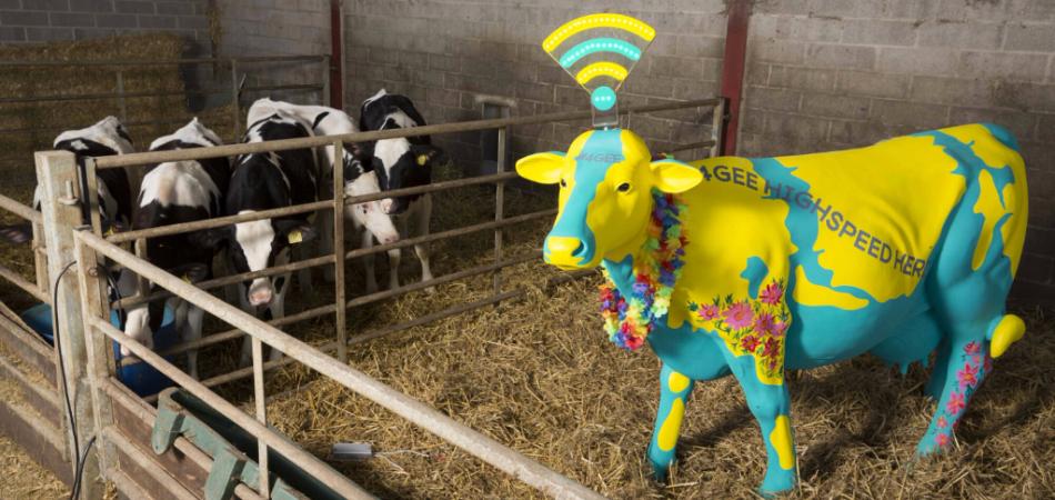 EE Glastonbury cow